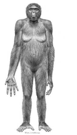 """Résultat de recherche d'images pour """"ardipithecus ramidus caracteristicas"""""""
