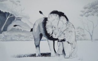 A black and white water colour painting of two lions by Keith Cains.