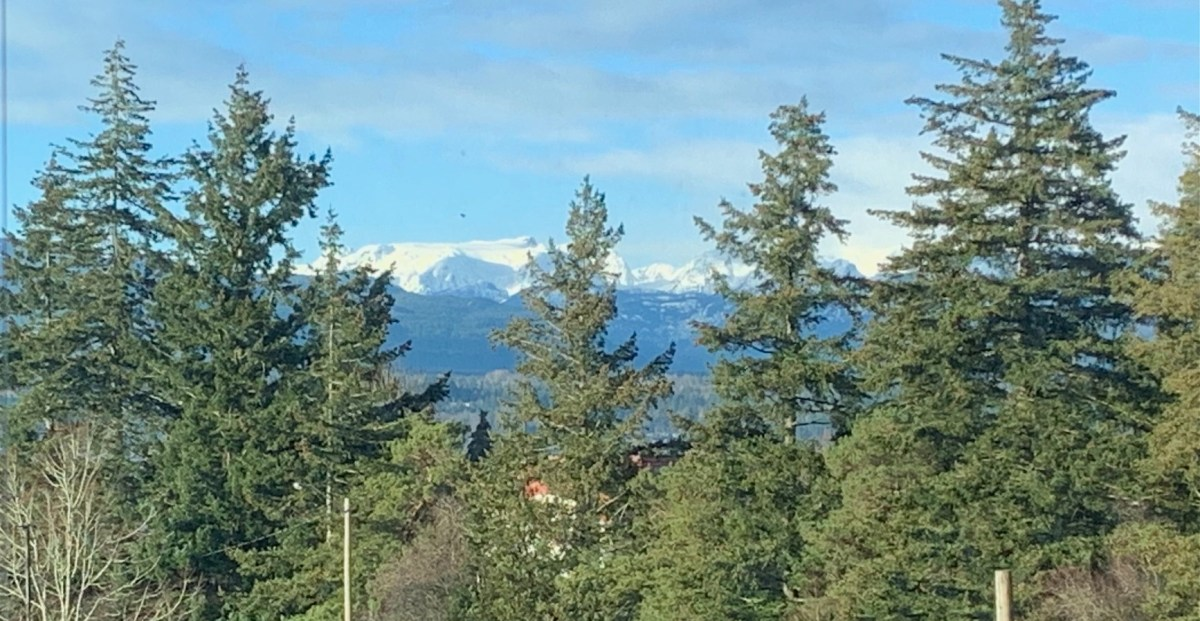 A snow-capped mountain range on Vancouver Island, with pine trees framing the view.