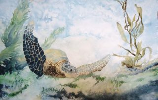 A water colour painting of a sea turtle by Keith Cains.
