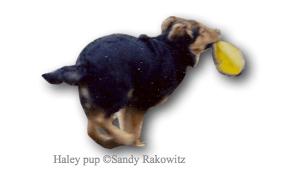Haley Pup