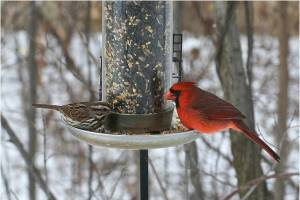 winter birds and feeder