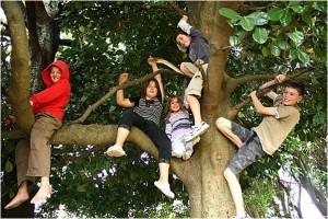 climb_a_tree
