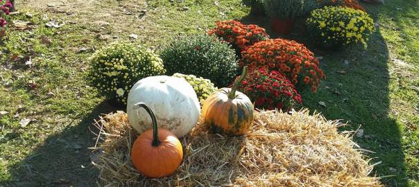 pumpkins-and-flowers