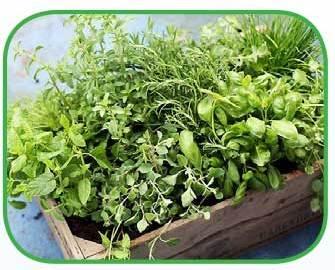 healing_herbs