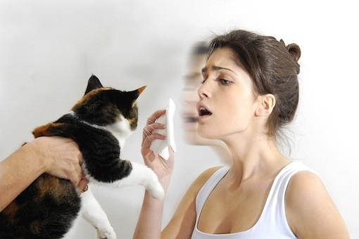 Cat Allergies | MD-Health.com