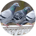 Bird Proofing, Cleaning and Maintenance