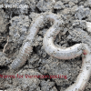 How to Use Worms for Vermicomposting