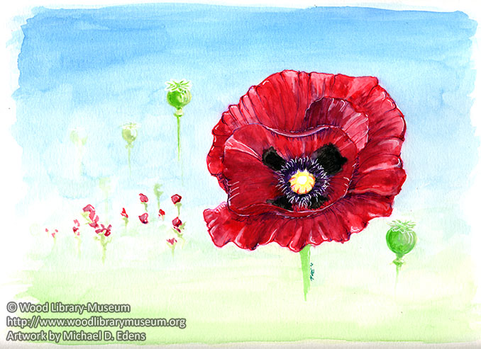 Papaver Somniferum (Poppy) Watercolor Note Card