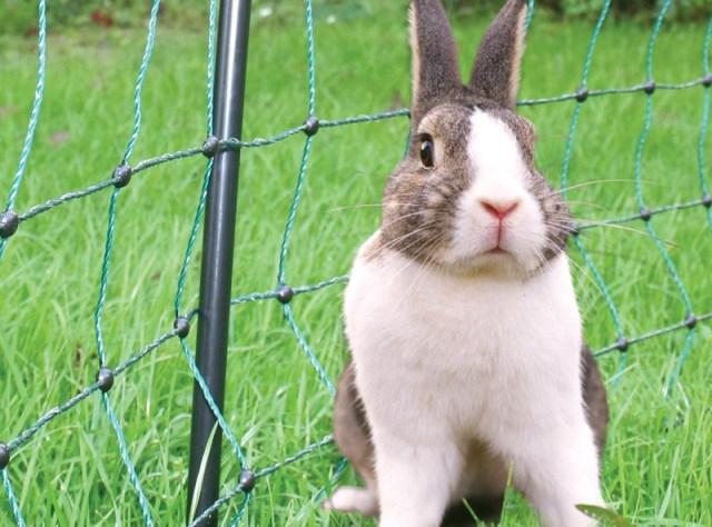 162-50010-koltec-konijnennet-01