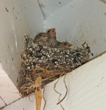 Rowan FOCUS nest