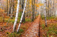 Jesup Path in Autumn by Howie Motenko