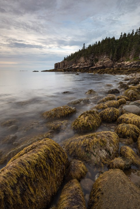 Otter Cliffs seen from Boulder Beach at low tide in Acadia National Park, Mount Desert Island, Maine.