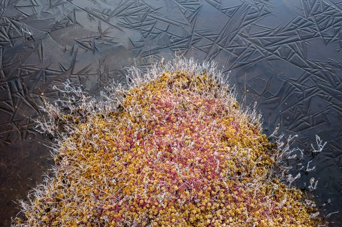 Frost, and a thin layer of ice, cover water, twigs, and moss in a small section of sphagnum bog in Acadia National Park, Mount Desert Island, Maine.