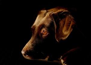"Kenn Assignment ""Recue Pup"""
