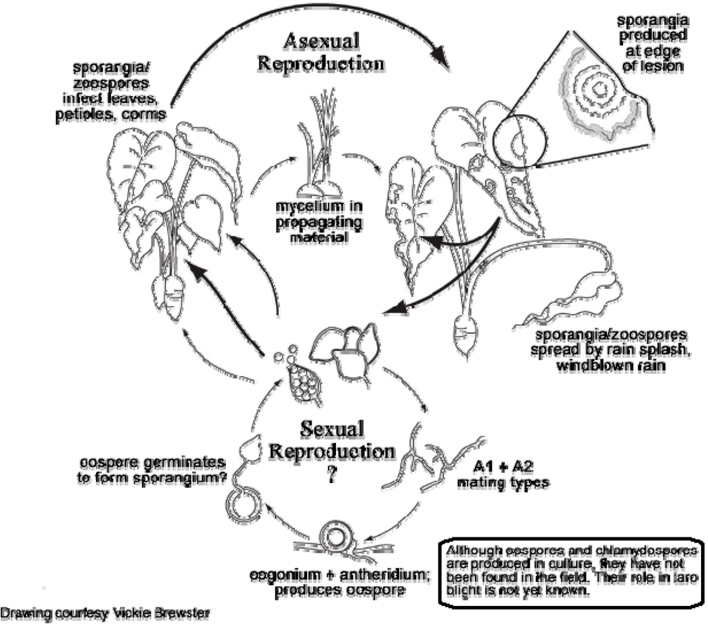 Elephant Life Cycle Pictures
