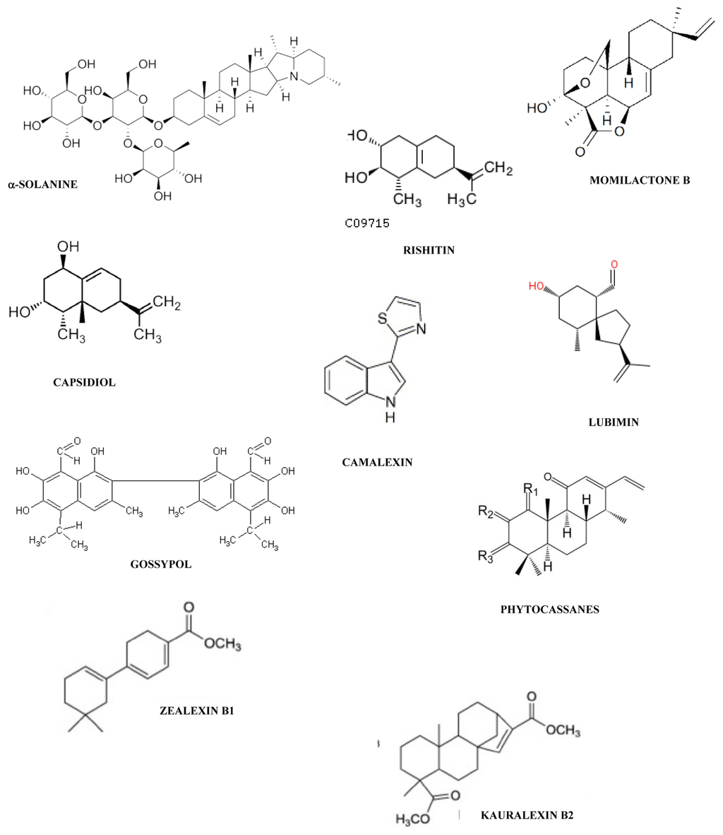 Steroid Biosynthesis Pathway