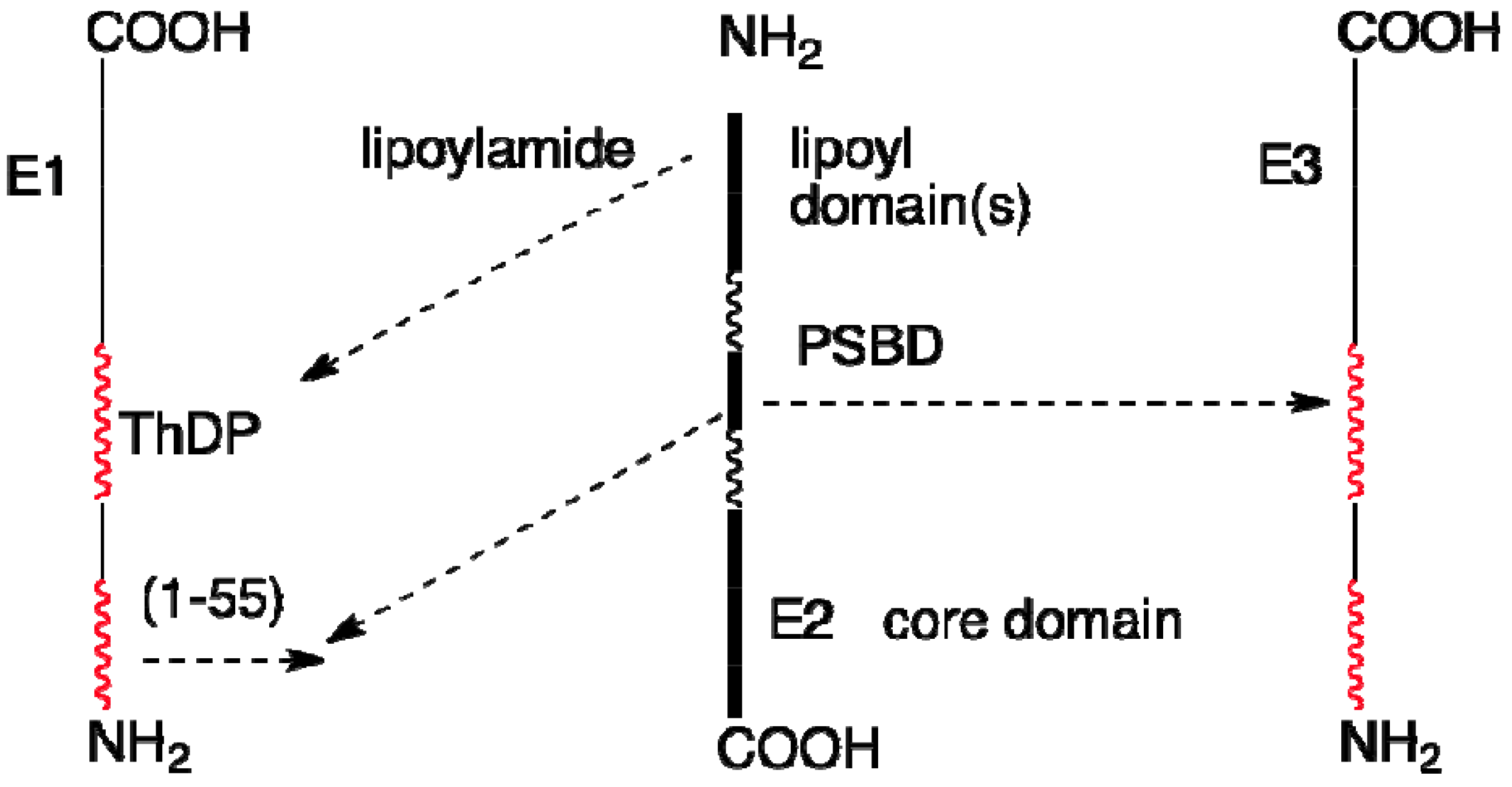 32 Label This Diagram Of The Reaction Catalyzed By The E2