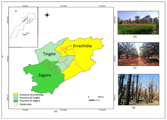 Benefits of Circular Agriculture for Cropping Systems and Soil Fertility in Oases