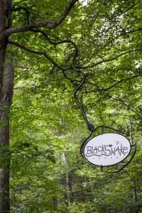 Blacksnake (5)