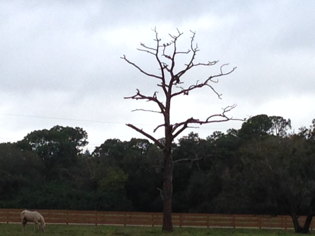 Ozzie in tree