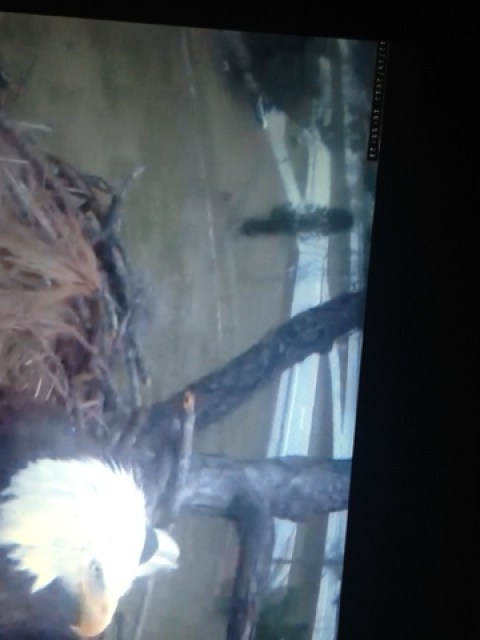 eagle cam us