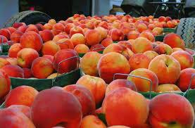 peach orchard.1jpg