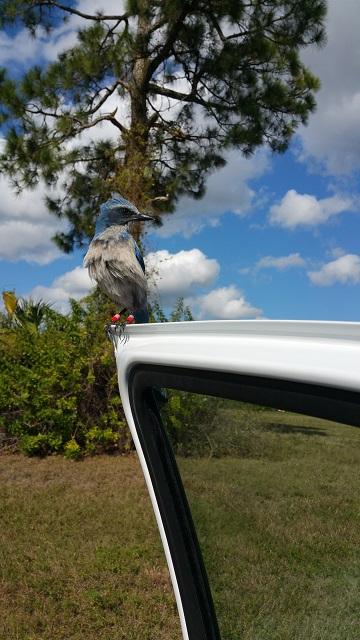 blue bird22