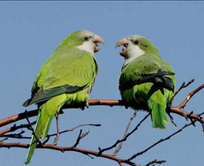 boathouse parrots
