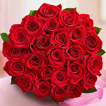 February red roses