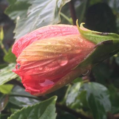 Raindrops, Metaphors And The Awakening Earth!