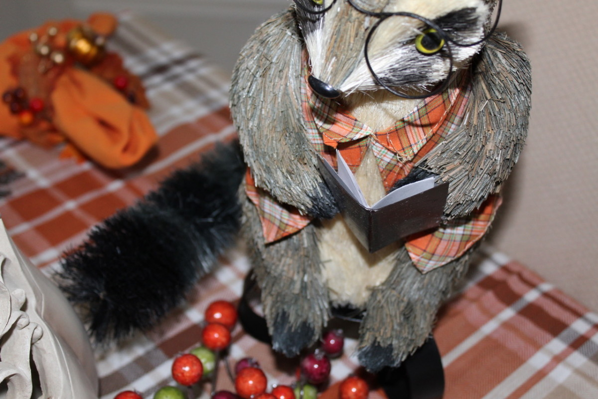 reading raccoons