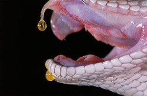 snake_venom