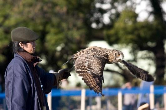 falconer3