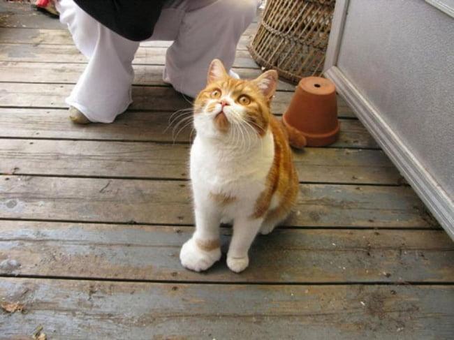 15-gatinhos-que-tiveram-uma-dura-batalha-contra-abelhas2