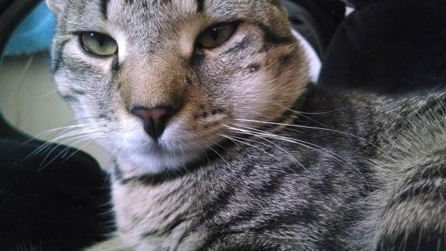 15-gatinhos-que-tiveram-uma-dura-batalha-contra-abelhas9