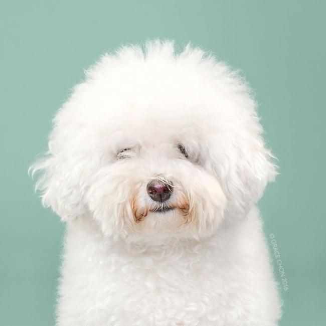 cabeleireiros-e-o-dom-de-deixar-um-cachorro-irreconhecivel5