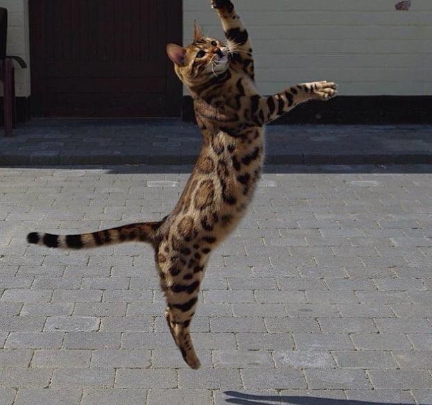 thor-o-gato-do-pelo-perfeito3