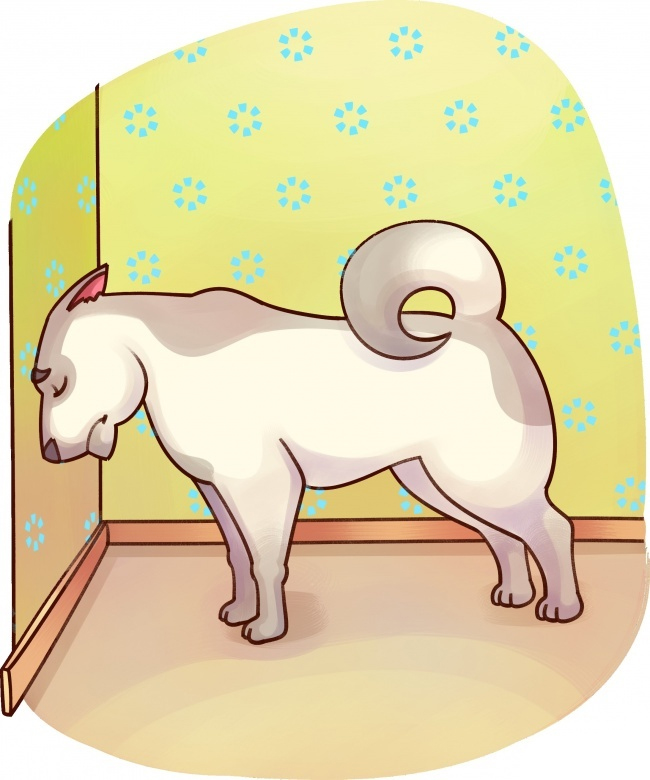 se-algum-destes-sintomas-aparecer-leve-seu-bichinho-imediatamente-ao-veterinario10
