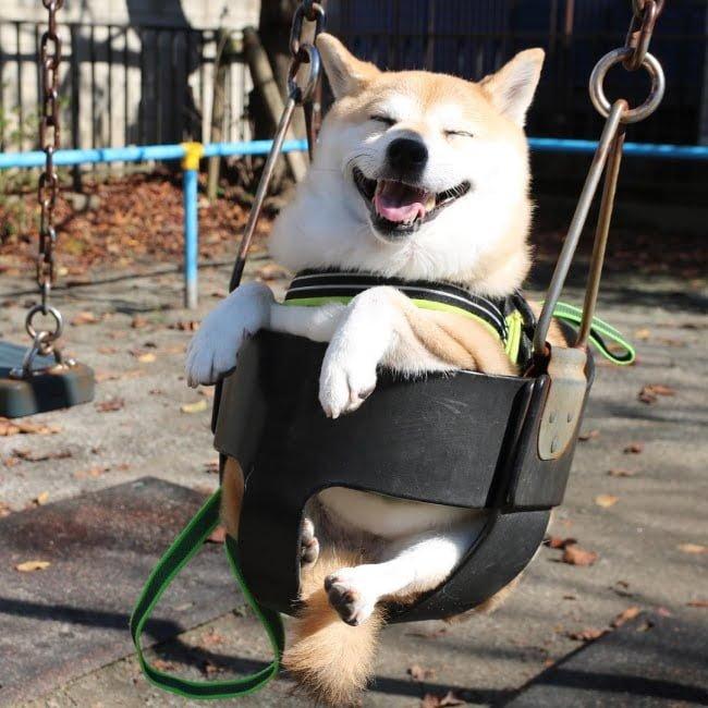 20-fotos-de-cachorros-completamente-felizes-com-a-situacao-em-que-estao1