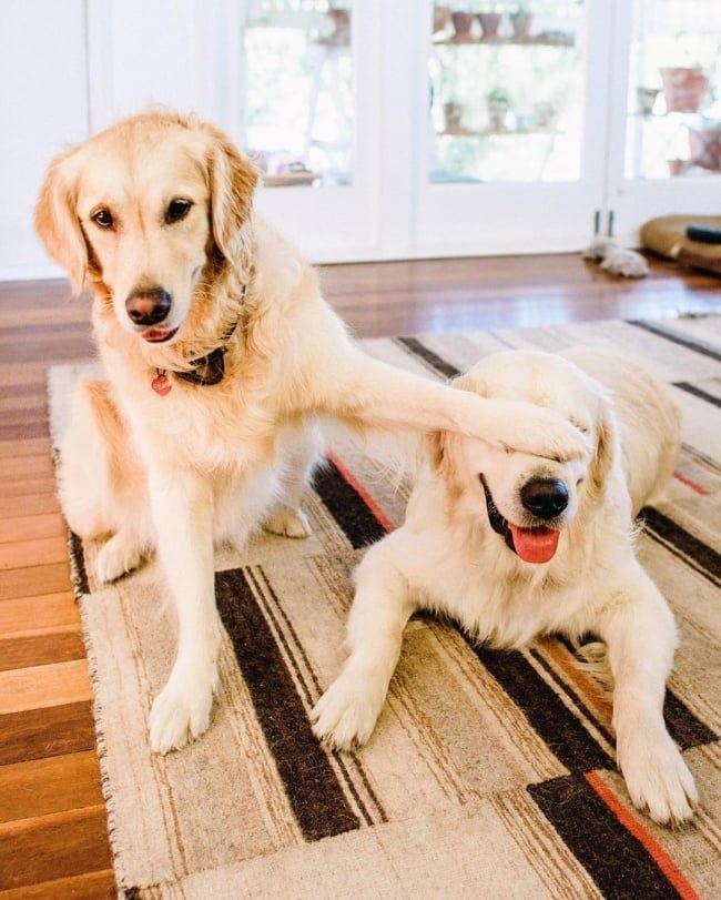 20-fotos-de-cachorros-completamente-felizes-com-a-situacao-em-que-estao9