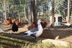 Le Palais de poulet
