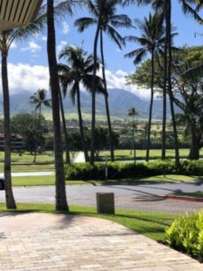maui Hawaii landscape mountains and palm trees