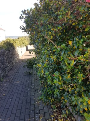 Laytown Tidy Towns path cleaning