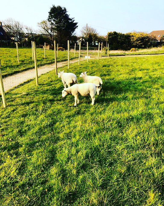 New Members of the CNI Clann