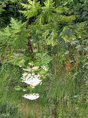 A picture containing plant Description automatically generated