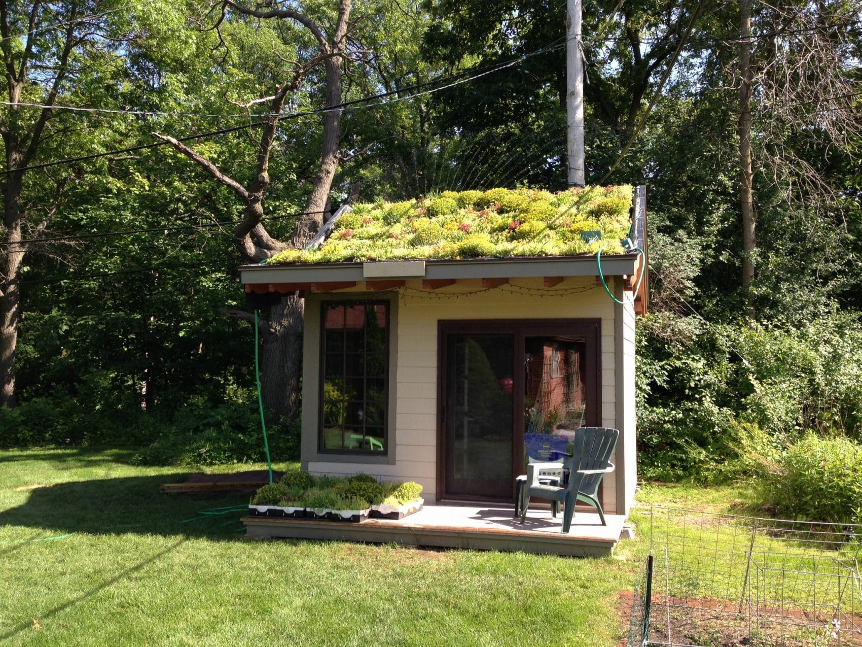 green roof plants installed
