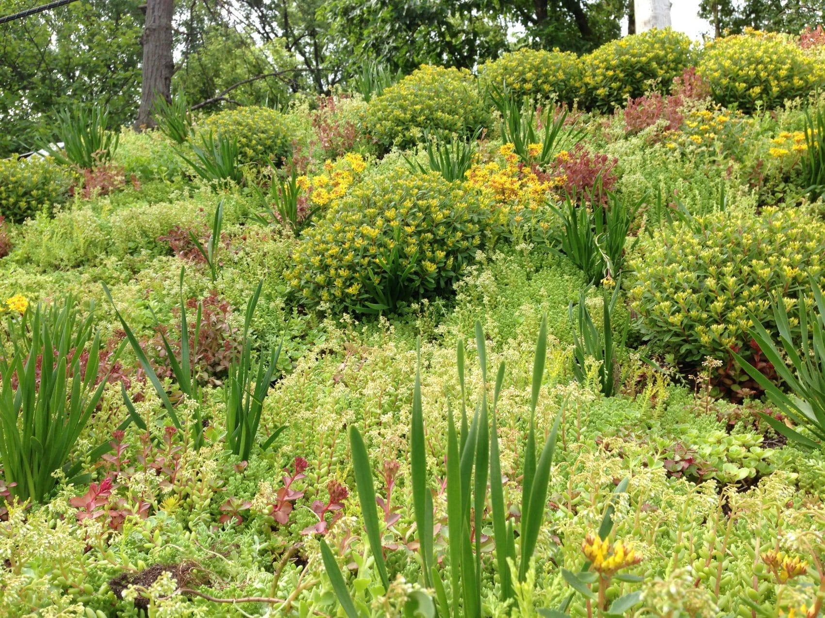 architect's garden studio green roof plants