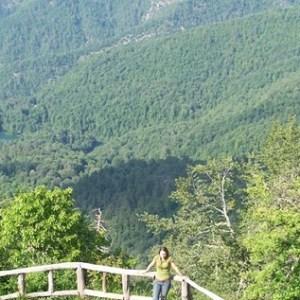 Yedigöller Milli Parkı, Nerededir ve Nasıl Gidilir?