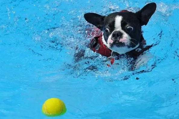 tennis ball in pool to absorb oil pool care hack